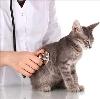 Ветеринарные клиники в Елань-Коленовском